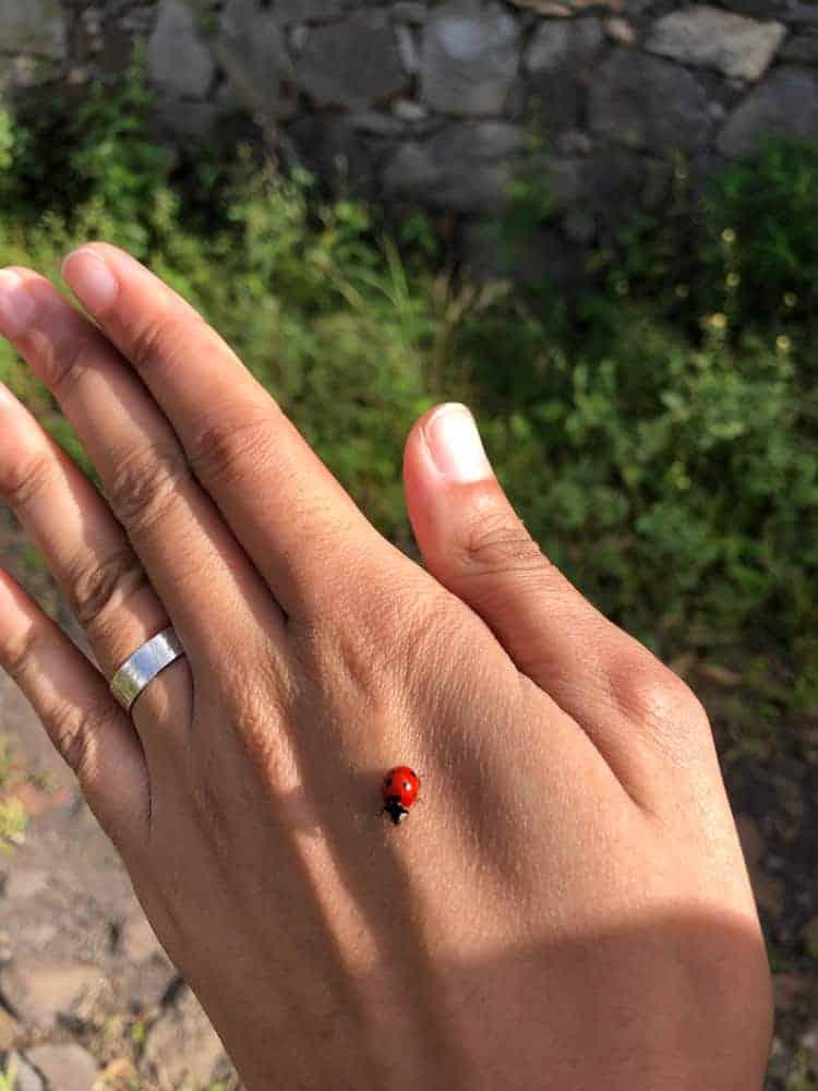 Ladybug Animal Spirit Symbolism