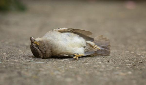 8 Spiritual Meanings of Dead Bird