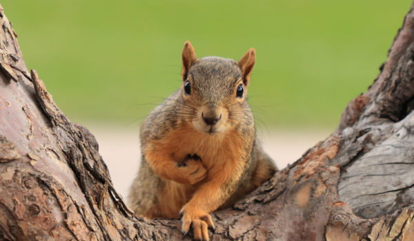 23 Spiritual Symbolism & Meanings of Squirrel (Totem + Omens)