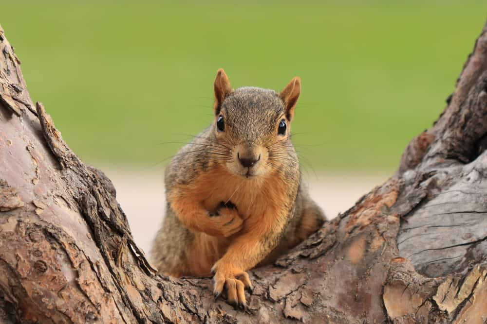 squirrel spirit animal