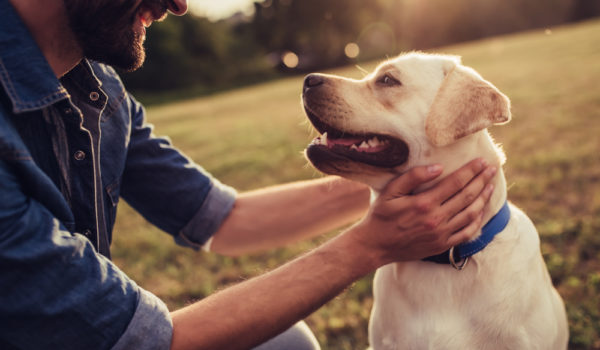 """10 Spiritual Meanings When Dream Of Your """"Deceased Dog"""""""
